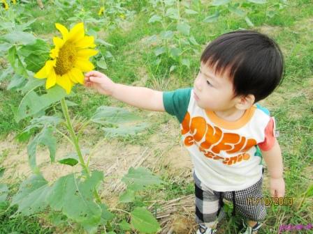 蘆竹花海 (55).jpg