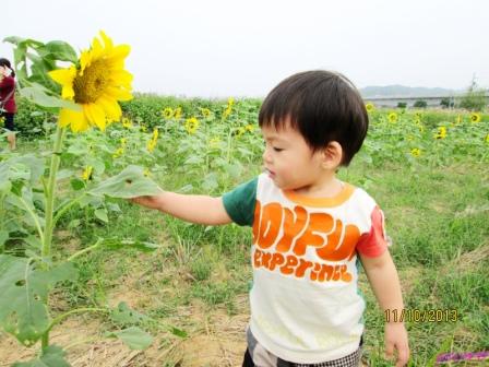 蘆竹花海 (57).jpg