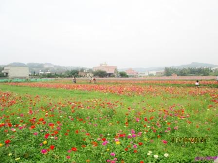 蘆竹花海 (98).jpg