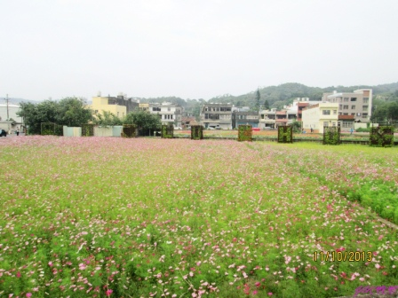 蘆竹花海 (105).jpg
