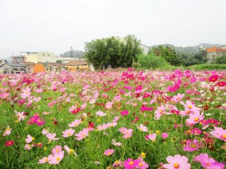 蘆竹花海 (126).jpg