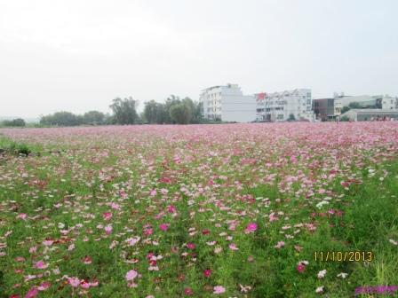 蘆竹花海 (130).jpg