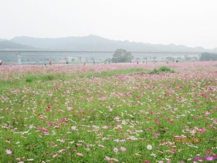 蘆竹花海 (136).jpg