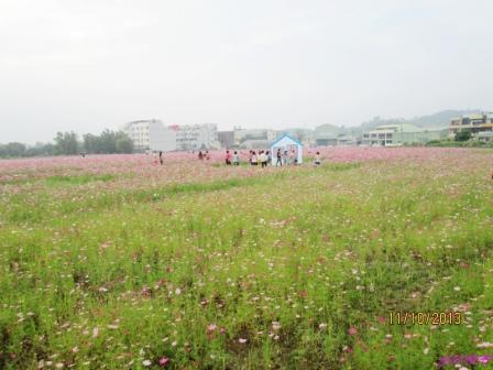 蘆竹花海 (140).jpg