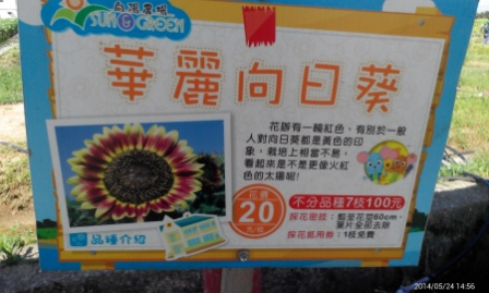 向陽農陽 (33).jpg