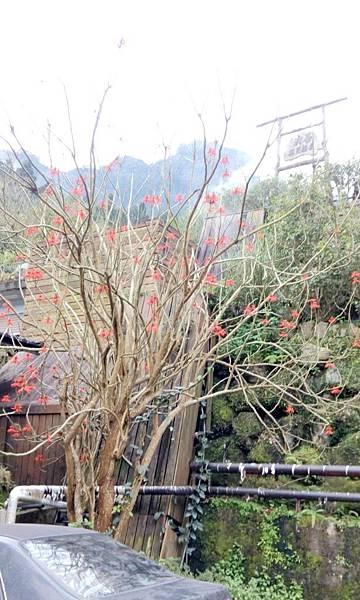 新竹峇里森林溫泉渡假村 (9).jpg