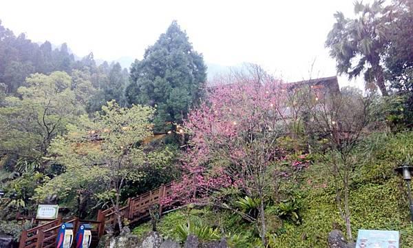 新竹峇里森林溫泉渡假村 (19).jpg