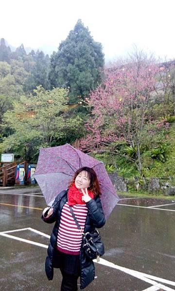 新竹峇里森林溫泉渡假村 (20).jpg