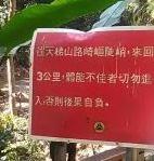 南投竹山天梯 (201)