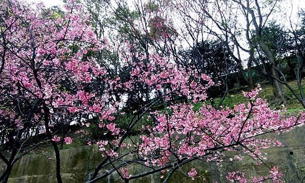 桃園龜山壽山巖 (13).jpg