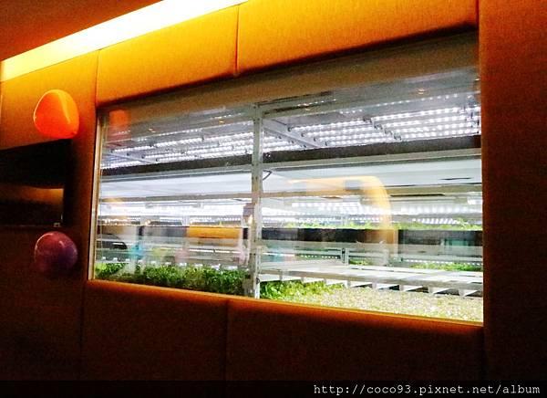 美蔬菜小小科技農夫親子體驗營  (5).jpg