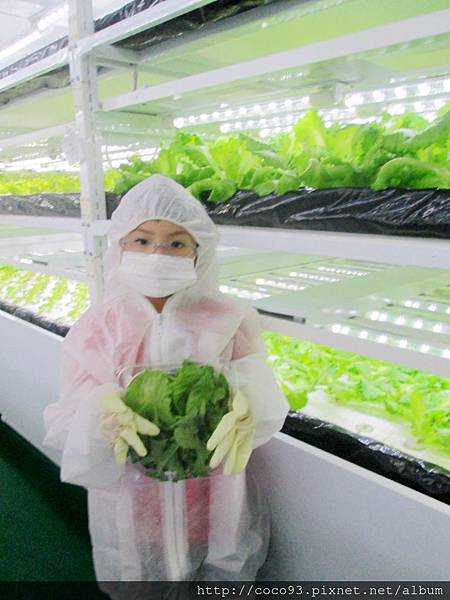 美蔬菜小小科技農夫親子體驗營  (46).jpg