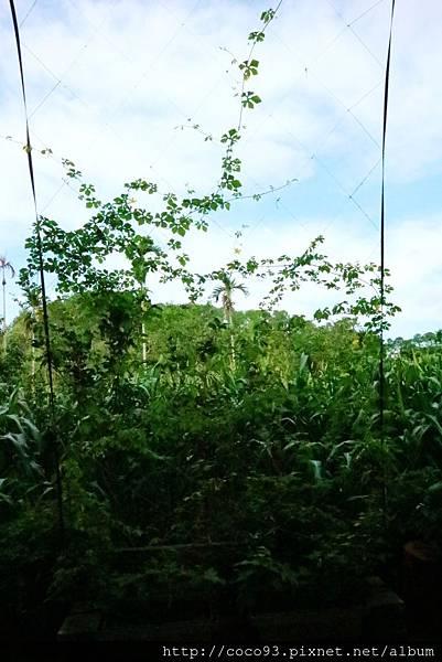 好珈農莊 (7).jpg