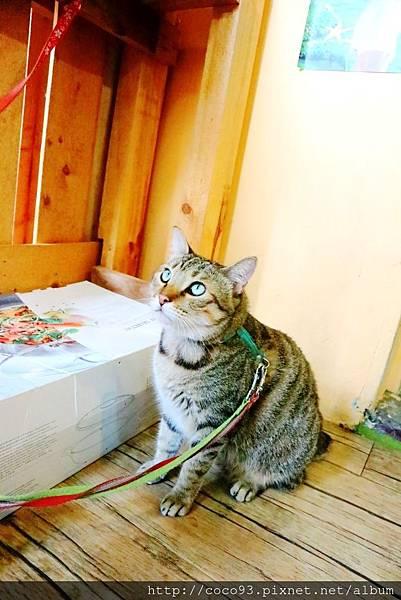 愛的幸福貓 (20).jpg