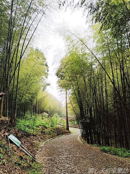雲林古坑草嶺石壁森林療癒小旅行 (11).jpg