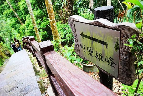 雲林古坑草嶺石壁森林療癒小旅行 (28).jpg