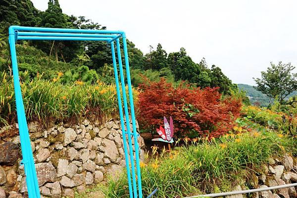 竹子湖故鄉農園金針花田 (12).jpg
