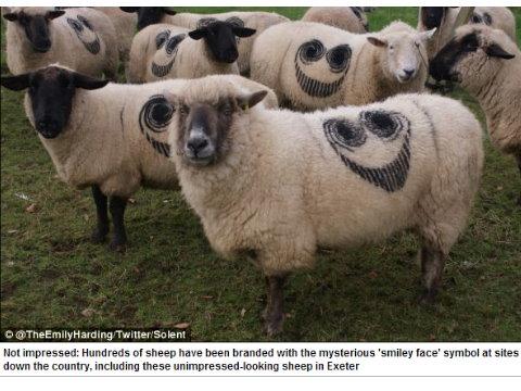 金沙娛樂城  羊