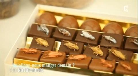昆蟲巧克力 天子神州