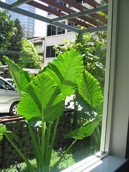 好吃的餐廳窗外一景