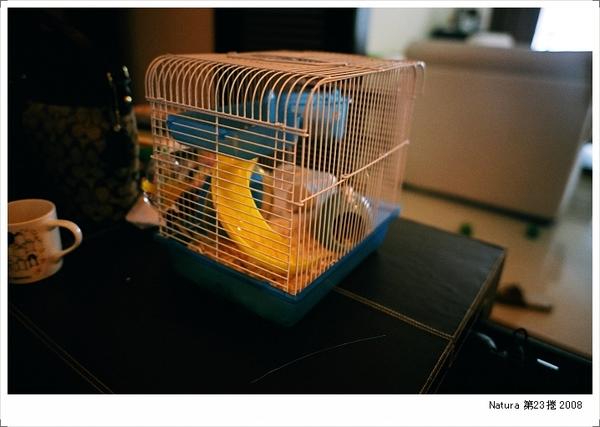 剛養的小老鼠