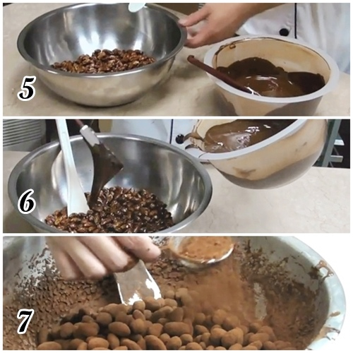 coconia巧豆5