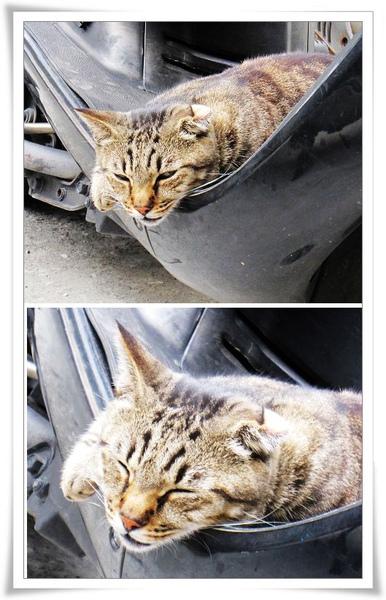 貓貓懶洋洋.jpg