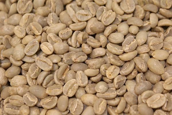 薩爾瓦多 - 庇里牛斯莊園生豆