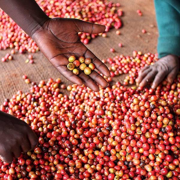 Kenya AA Kaguyu