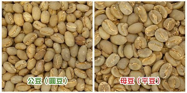圓豆VS平豆