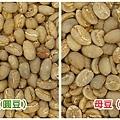 原豆VS平豆