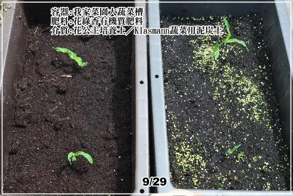 corn011