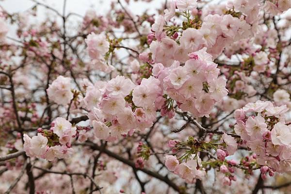 2014-04-04_09-55-52_副本.jpg