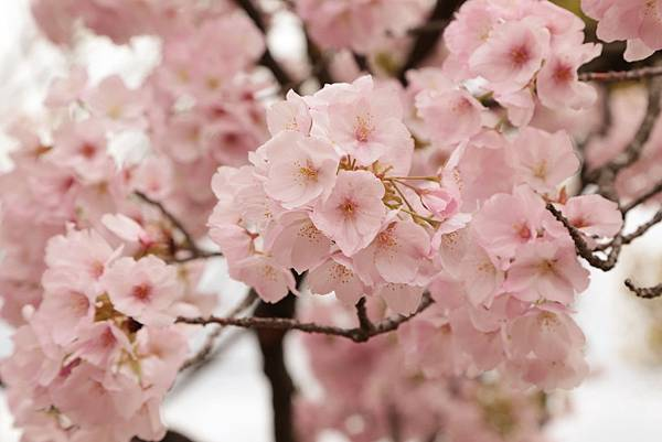 2014-04-04_09-58-48_副本.jpg