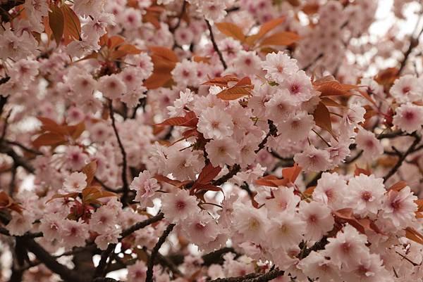 2014-04-04_09-59-05_副本.jpg