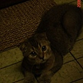 COLA與他的貓抓板