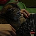 COLA玩電腦