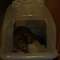 好奇新的貓砂