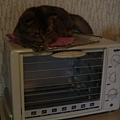 睡在烤箱上面的COLA