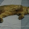 這樣睡,感覺挺瘦的