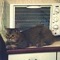 烤箱守護者