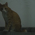住處鄰居家的貓