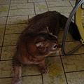 COLA與洗衣籃