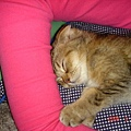 睡覺喜歡抓著我的手臂
