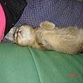 睡成這樣的姿勢也算一絕