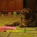 COLA:媽咪不要偷懶,快點移動逗貓棒啦!