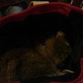 把頭埋在袋子裡睡覺了!