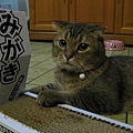 想要好好享用貓抓板