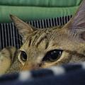 SAWA窩貓床