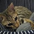 SAWA:這枕頭不錯!